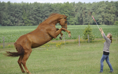 Thoughts on Horse-Oriented Training