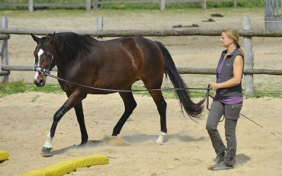 Lungeing course work with horses with health problems