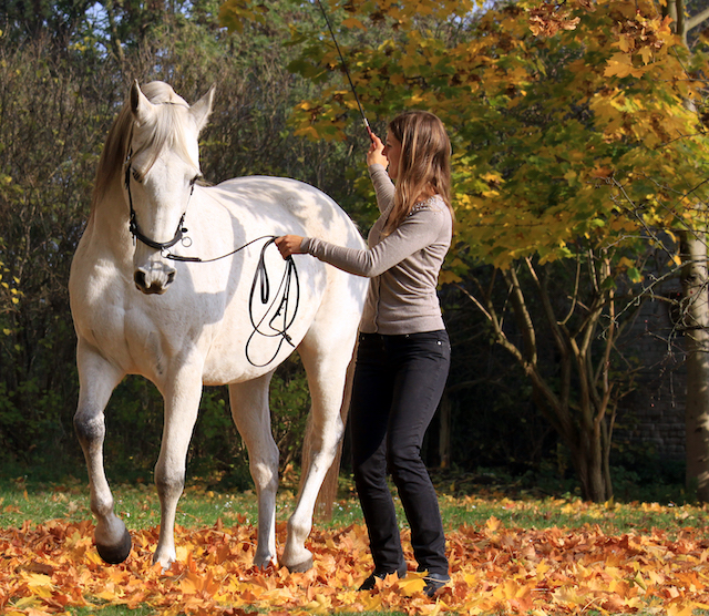 From starveling to soulhorse – a lungeing course success story