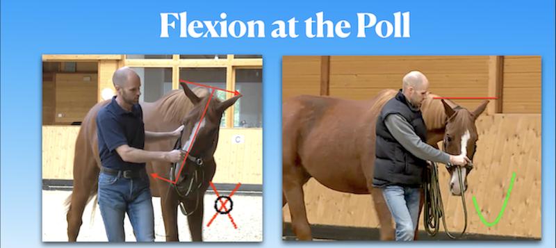 Flexion at the Poll